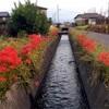 iPhoneで撮った花と景色を綺麗に見せる方法