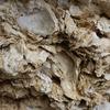 カルケル(calcaire)とカルキの違い┃フランスの水は体に悪い?