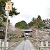 光明寺の桜。見頃や開花状況。