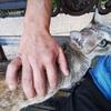 朝の散歩でタイ猫と遊ぶ