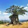 【必見】カンボジア第二の世界遺産プレアヴィヒア寺院に行って来ました!