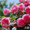 つるヒストリー 2011/05/31 〜京成バラ園2011春にて
