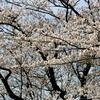 惜春(せきしゅん)−春の嵐(メイストーム)