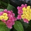 庭の蕾と花