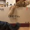 4Kテレビがやってきた。Yeah!Yeah!Yeah! LG 43UJ6100
