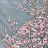 ピンクの木
