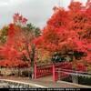 11月10日(火)晩秋、最後の紅葉狩り、土湯温泉鏡ヶ池の寒桜、米国、皮肉な事に新型コロナワクチン90%の確率で成功