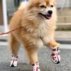 【靴が大好きな犬】~ぷにぷに肉球を守りたい~