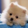 犬には人間の心がわかるの?