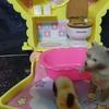 【夢日記】7月27日 ~7月28日 お風呂に沈む猫
