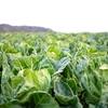 野菜の病気や害虫が発生する条件を知って備える病害虫対策ガイド