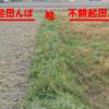 田んぼの中の草の種類は、不耕起に適した草が生えています♪