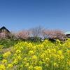 千葉県の菜の花3名所を紹介!黄色い絨毯を見てきました