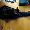 ギターケースに擬態する猫、&小説更新♪
