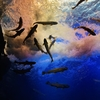 オホーツク観光【北の大地の水族館】日本一、日本初、そして世界初がある山の水族館