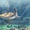 ブレないカメラDJI OSMOを水族館で使ってみたレビュー!