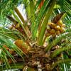 カナビスとココナッツオイルで作る、食べれる万能バーム【食べる大麻、エディブル】