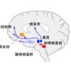 筋トレを続ける技術~脳をハックしよう!