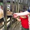 スイミングと動物園