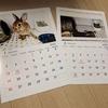 ウサギのちまきの手作りペットカレンダー♪