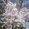 大阪府北部の地震で、東日本大震災間もなくの宮城県仙台市を思い出す。