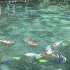 モネの池とセントレアへ釣り