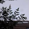 作曲工房 朝の天気 2017-09-28(木)くもり やがて 晴れ