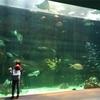 真夏の宮島水族館に行ってきました