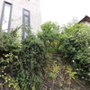 2012/05/02 西角植栽のアンジェラ