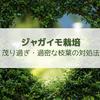 【ジャガイモ栽培】鬱蒼と茂り過ぎ・過密な枝葉は間引くべき?放置すべき?