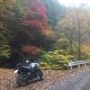 秋の御荷鉾林道ツーリング!(後編)