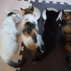 猫風邪の場合はワクチン接種はダメです。