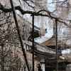 善峯寺(2014桜)西国二十番札所