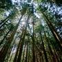 済州島(チェジュ島)初夏の祭り情報 #サリョニの森エコヒーリング #シーズングラス緑茶フェスティバル