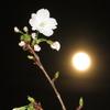桜と哲学カフェ