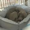 【ダメだったもの】フワフワのワンちゃんベッド