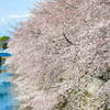 そろそろ桜の季節も終わりですね♬