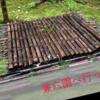【石川県・金沢市】雨の日の兼六園は苔がなかなかいい味出してて落ち着く