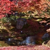 京都 嵐山「宝厳院」 真っ赤に紅葉したもみじで埋め尽くされる「獅子吼の庭」を紹介(Kyoto, Arashiyama, Hogonin)