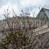 3月末:目黒川沿いをお写んぽ。その3