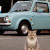 なぜか猫が猛烈に寄ってくる・・・