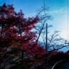 【写真】スナップショット(2018/11/11)大野ダムその1