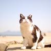 猫島で猫にであった