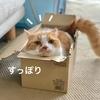 TPOにあわせた箱の使い方ができる箱マスターるるちゃん。