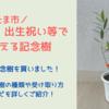 【さいたま市】婚姻・出生・住宅の新築祝いで記念樹を貰おう!実際に受け取ってきました!