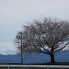 手取川桜堤でお花見