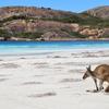 オーストラリアで一番と噂のビーチ、ラッキーベイ
