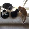 猫の防災用品 災害の備蓄を考える。