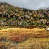 栂池自然園の紅葉、曇りでもこんなに綺麗だよ!(2018.10.9現在の様子)