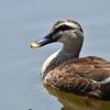 野鳥撮影に行ってきました@葛西臨海公園